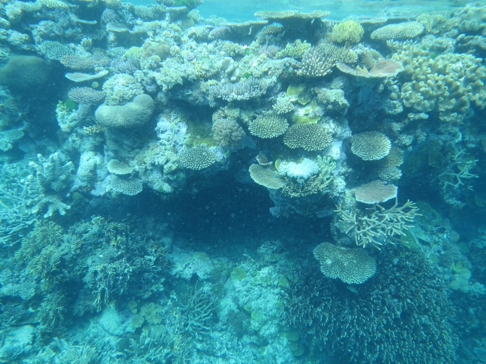 Vacation Part One: Great Barrier Reef (4/6)