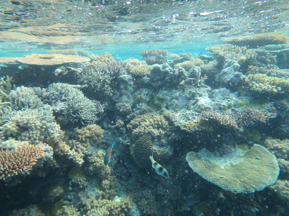 Vacation Part One: Great Barrier Reef (5/6)