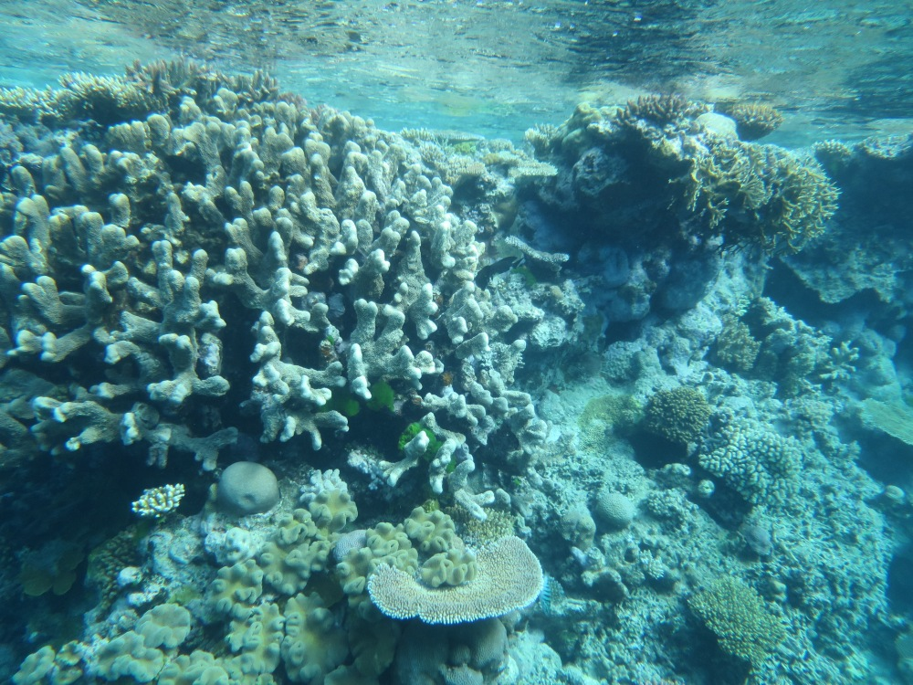 Vacation Part One: Great Barrier Reef (6/6)